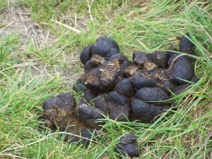 Horse dung - how often can you use a photo of shit on a blog. Found at: http://www.sxc.hu/photo/1060896